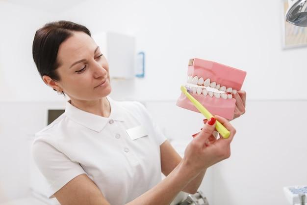 Женский стоматолог показывает, как правильно чистить зубы на пластиковой модели челюсти
