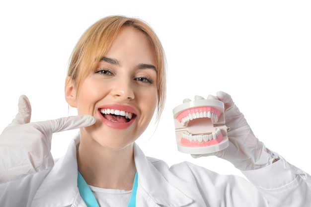 Female dentist with plastic jaw model on white surface