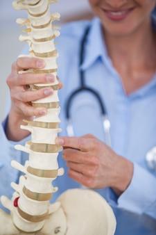 脊椎モデルを保持している女性医師