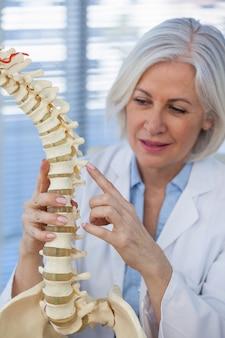 Женский доктор держа модель позвоночника