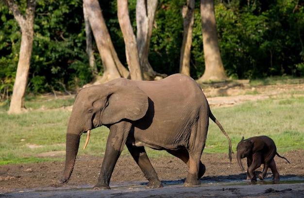 赤ちゃんと女性の象