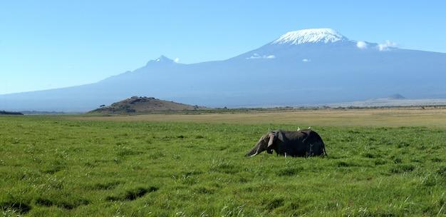 Слонушка с горы килиманджаро