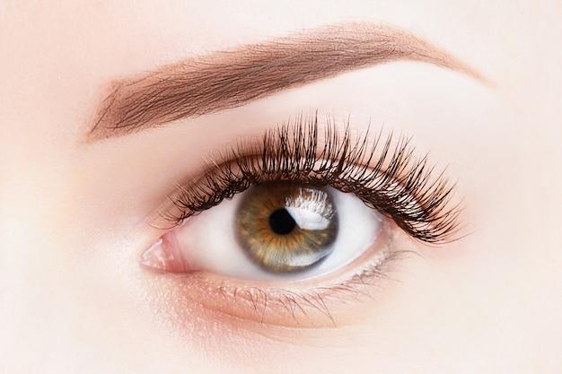まつげの長い女性の目。古典的なまつげエクステと薄茶色の眉毛のクローズアップ。
