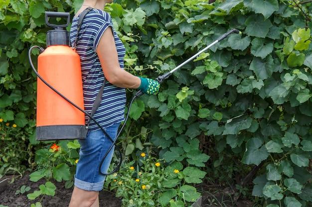 여성 농부는 압력 분무기로 곰팡이 질병이나 해충으로부터 포도 덤불을 보호하고 있습니다.