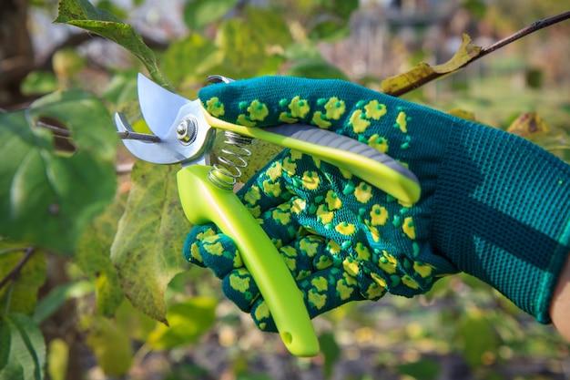 여성 농부는 정원을 돌본다.정정기 가위가 있는 녹색 장갑을 끼고 나무 끝을 돌본다.