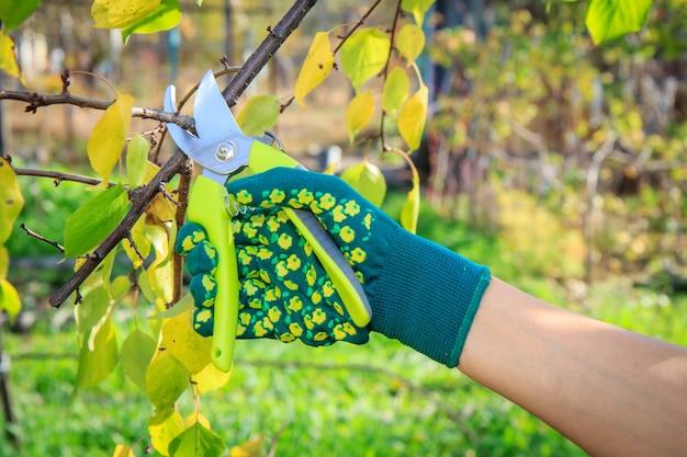 여성 농부가 과수원을 돌봅니다. 과일 나무 가지 치기. pruner와 녹색 장갑에 여자가 나무의 끝을 가위.