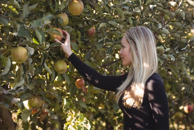 Женщина-фермер смотрит на яблоню