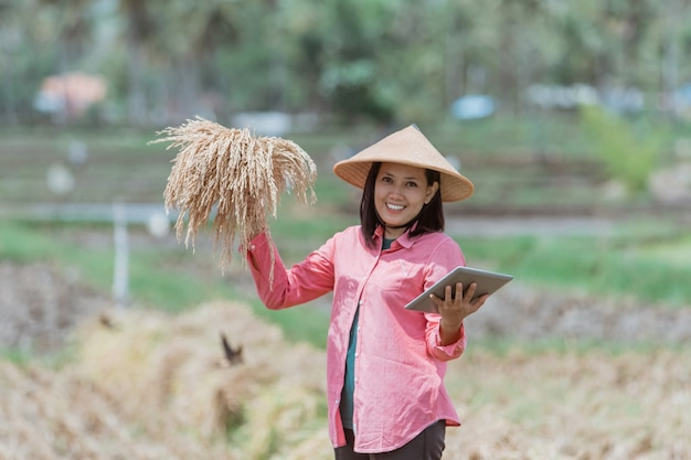 여성 농가는 모자를 쓰고 쌀밭에 서서 벼를 들고 서 있습니다.