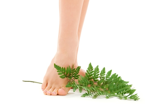 흰색 위에 녹색 잎을 가진 여성 피트