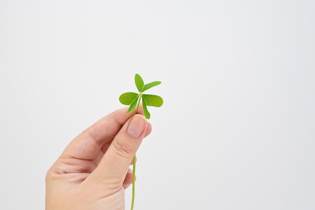 Female fingers hold green leaf clover on white