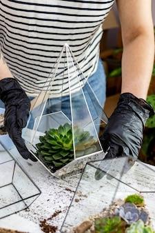 女性の花屋の配置は、石の装飾のクローズアップでガラスの植物相に多肉植物の自然植物を