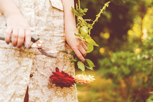 여성 플로리스트는 꽃다발을 만들기 위해 정원에서 가위로 꽃 장미를 자른다.