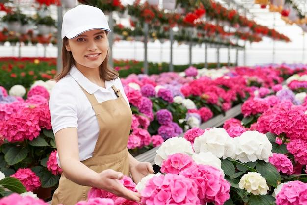 温室の鉢にアジサイを調べる女性の花屋