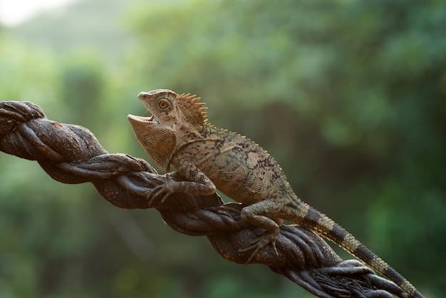 Женский лесной дракон на ветке дерева