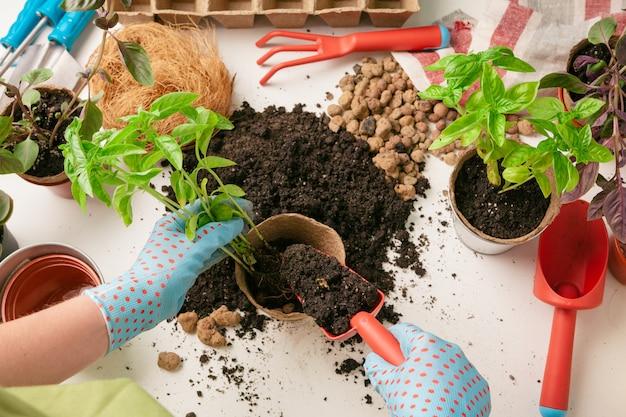 도구를 사용하여 집에서 식물을 배열하는 여성 정원사