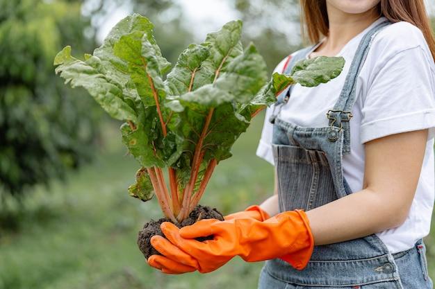 여성 정원사는 두 손을 사용하여 채소 침대에서 뿌리를 뽑은 후 건강하게 식물을 잡고 있는 젊은 여성 정원사를 컨셉으로 합니다.