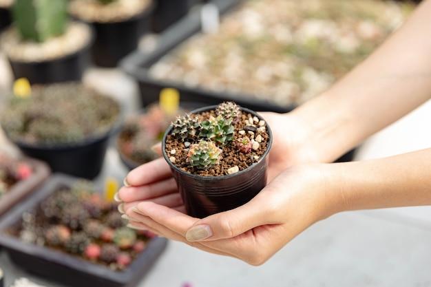 Женщина-садовник представляет несколько крошечных кактусов в черном пластиковом горшке, которые держат двумя руками того, кто носит джинсовый фартук.