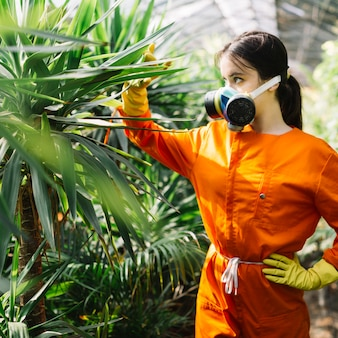 Female gardener examining plant in greenhouse