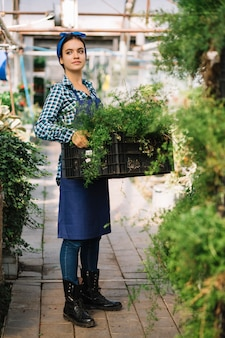 Female gardener holding crate with fresh plants in greenhouse