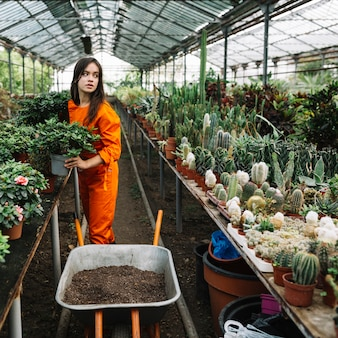 Female gardener holding potted plant in greenhouse