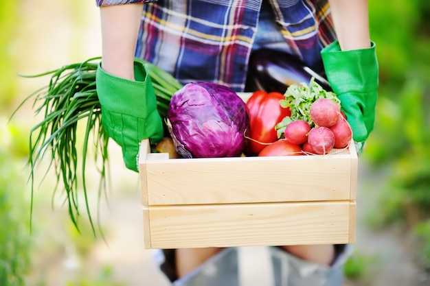 Female gardener holding wooden crate with fresh organic vegetables from farm