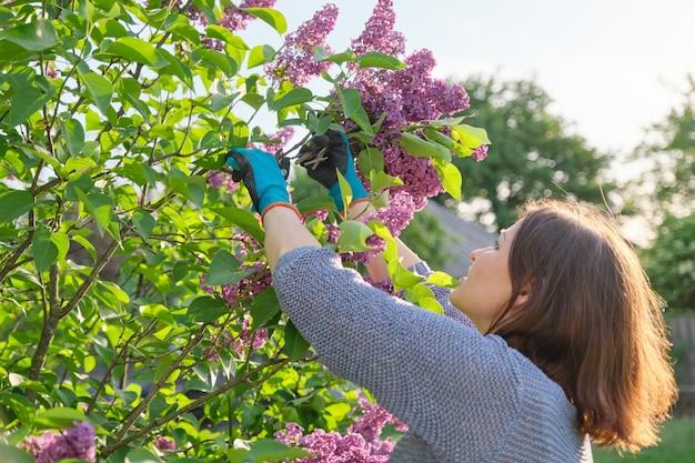 Женщина-садовник в перчатках с секатором срезает ветки сирени