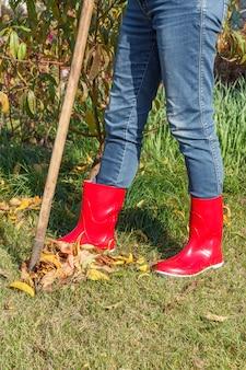 Садовница в джинсовых штанах и красных резиновых сапогах очищает сухие листья старыми граблями осенью.