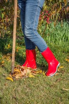 Садовница в джинсовых штанах и красных резиновых сапогах осенью очищает сухие листья старыми граблями.