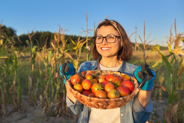 Женщина-садовник в огороде с корзиной спелых помидоров. хобби, садоводство, выращивание органических овощей в домашнем саду, здоровая натуральная пища, копировальное пространство