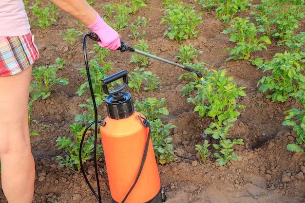 여성 정원사는 정원에 있는 압력 분무기로 곰팡이 질병이나 해충으로부터 감자 식물을 보호하고 있습니다.