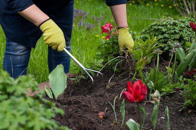 여성 정원사는 식물을 심기 위해 꽃들 사이에서 화단의 토양을 느슨하게합니다.