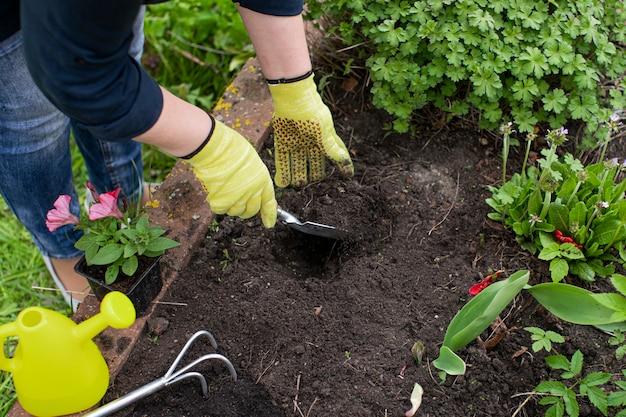 Садовница-женщина рыхлит почву на клумбе среди цветов для посадки растений