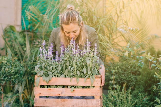 Female gardener smelling the lavender plants in the crate at plant nursery
