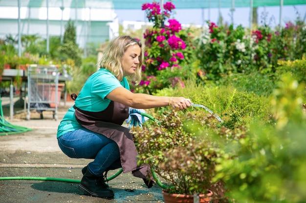 Садовница садится на корточки и поливает горшечные растения из шланга. кавказская блондинка в синей рубашке и фартуке, выращивая цветы в теплице. коммерческое садоводство и летняя концепция