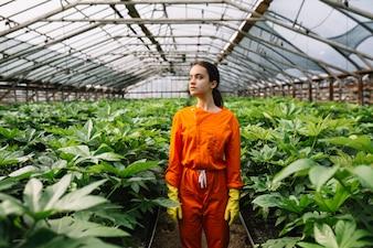 Female gardener standing near fatsia japonica plants growing in greenhouse