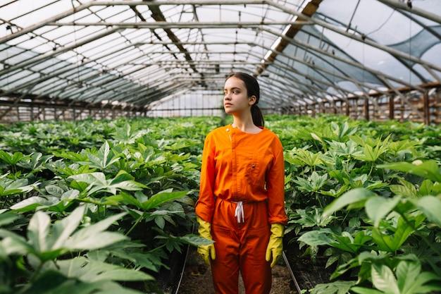 온실에서 자라는 fatsia japonica 식물 근처에 서있는 여성 정원사