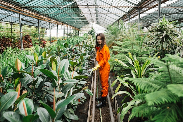 Female gardener watering plants with hose in greenhouse