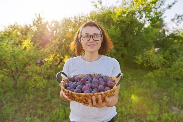 바구니, 정원 배경에 자두 작물을 가진 여성 정원사. 취미, 정원 가꾸기, 집 정원에서 유기농 과일 재배, 건강한 자연 식품