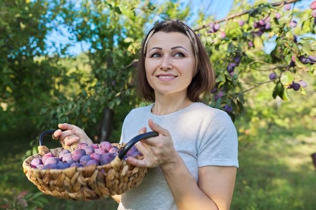 바구니, 정원 배경에 자두 작물을 가진 여성 정원사. 취미, 집 정원에서 유기농 과일 재배