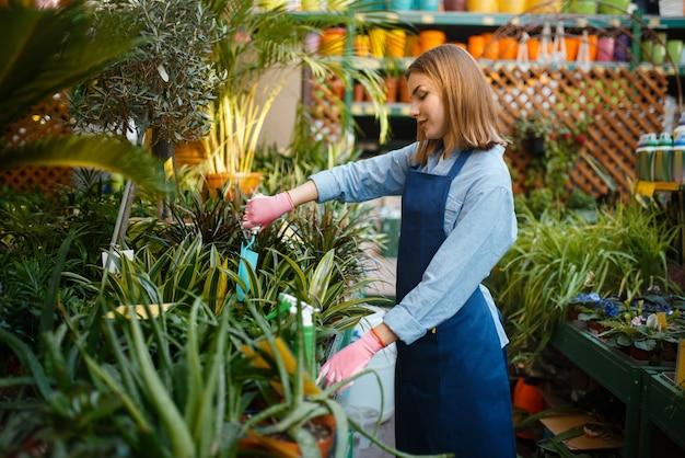 シャベルを持った女性の庭師が、園芸店で植物の世話をします。エプロンの女性が花屋で花を売る