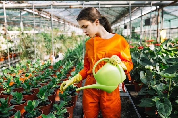 Female gardener with watering can examining plant in greenhouse