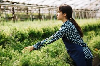 Female gardener working in the greenhouse