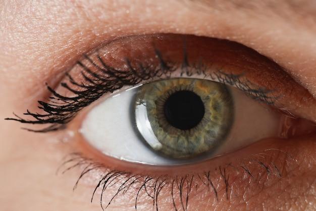 Female graygreen eye with painted eyelashes closeup