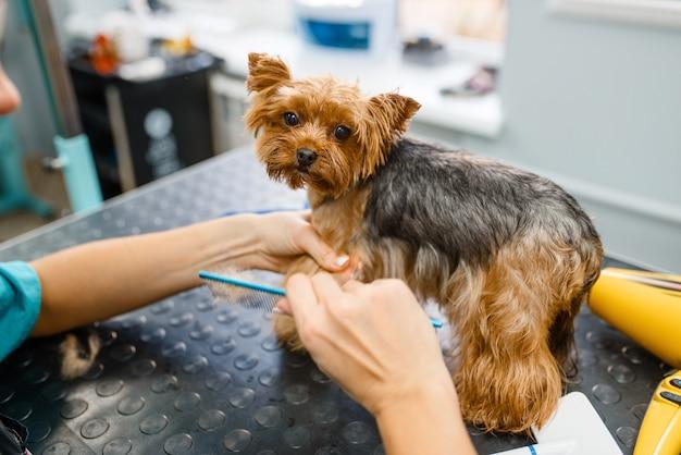 女性グルーマーは、洗浄手順、グルーミングサロンの後にかわいい小さな犬の毛皮をとかします。