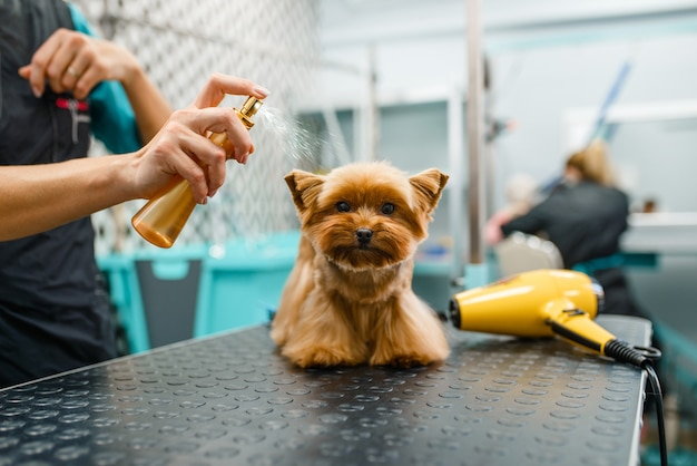 グルーミングサロンで、洗った後、かわいい犬に香水をスプレーする女性グルーマー。