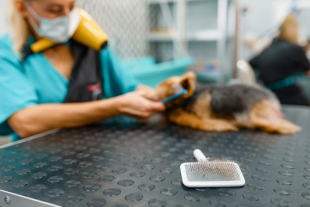 洗浄手順後の櫛とかわいい小さな犬の女性グルーマー、グルーミングサロン。