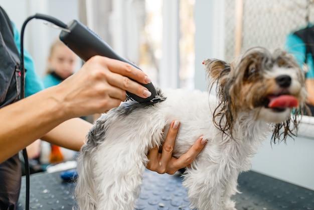 サロンで小さな犬を手入れするバリカンを持つ女性の手入れをします。 、愛らしい子犬