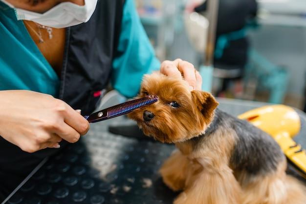 Female groomer with scissors cuts hair of cute dog