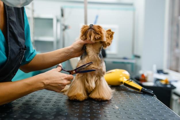 はさみを持つ女性グルーマーは、洗浄手順、グルーミングサロンの後にかわいい犬の髪をカットします。