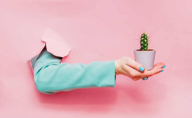 Female hand in classic blue jacket with cactus in pot
